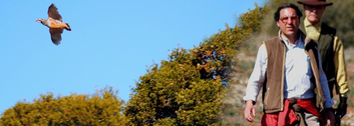 Caza pediz, paloma, tortola Toledo Castilla la Mancha